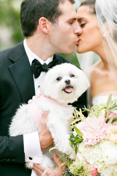 É possível ter seus pets no casamento. Compartilhe seu momento especial com seu pet!
