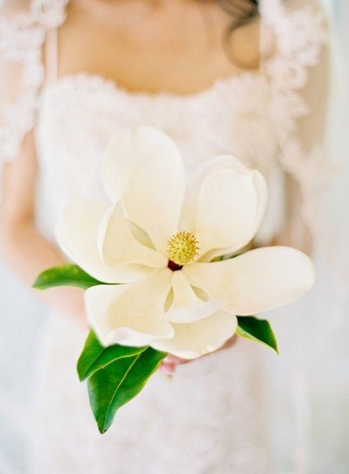 Las magnolias blancas son sinónimo de pureza y perfección